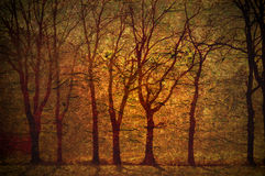Grungy background. Grunge vintage background with trees in warm colors Stock Photo