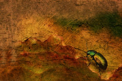 Grungy background. Grunge  vintage background with beetle Royalty Free Stock Photography