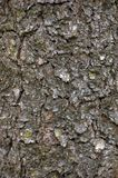 Grungy Bark Texture Background Stock Photography