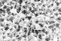Grungy bladeren Stock Afbeelding