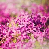 Grungy bloemenachtergronden Royalty-vrije Stock Foto's