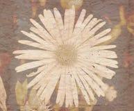 Grungy blom- bakgrund med textursamkopieringen Royaltyfria Foton