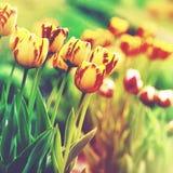 Grungy Blumenhintergründe Stockbilder