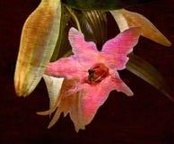 Grungy Blumentapete eine Weinleseart Lizenzfreie Stockfotografie