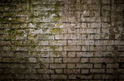 Grungy Brick Wall. Dirty brick wall texture covered in moss royalty free stock photo