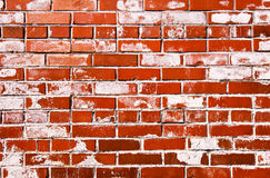 Grungy brick wall Royalty Free Stock Image