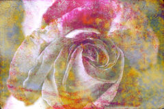 Grungy bright colorful abstract background rose close-up as a ba Stock Photo
