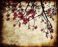 Grungy cherry blossoms vector illustration