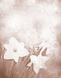 Grungy daffodil stationery Stock Photo
