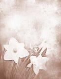 Grungy daffodil stationery stock photo