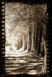 Grungy film with trees. Grungy film strip background with old trees Royalty Free Stock Images