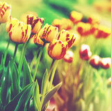 Grungy floral backgrounds. Stock Images