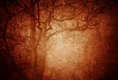Grungy forest Royalty Free Stock Image