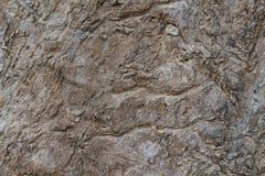 Grungy foto för textur för trädskäll Lantlig träskällbakgrund Tropiskt skogträd med den naturliga prydnaden royaltyfri bild