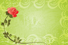 grungy green frame with  red rose Royalty Free Stock Photography