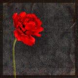 Grungy Hintergrund mit einer Tulpe Stock Abbildung