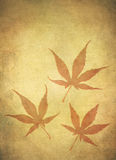 Grungy Japanese Maple Leafs royalty free stock photos