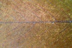 Grungy liść powierzchnia Zdjęcie Stock