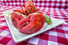 Grungy Lobster Stock Photography