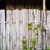 Grungy old bamboo fence with tree Royalty Free Stock Photo
