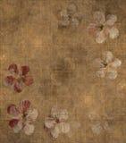 Grungy petal parchment background Stock Image