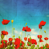 Grungy poppies. Wallpaper great as a background style Royalty Free Stock Image