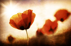 Grungy poppy field royalty free stock images