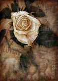 Grungy rose. Detail of rose in romantic grungy design Royalty Free Stock Images