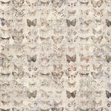 Grungy shabby chic butterfly design wallpaper background Royalty Free Stock Photography
