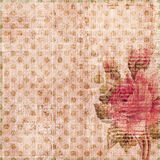 Grungy shabby spotted background with rose. A pink grungy shabby spotted background featuring a rose Stock Image