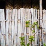 Grungy stary bambusa ogrodzenie z drzewem Zdjęcie Royalty Free