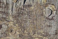 grungy texturträ för bakgrund Royaltyfri Bild