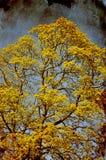 Grungy träd Royaltyfri Bild