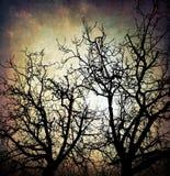 grungy trees för bakgrund Arkivbilder