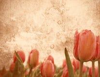 Grungy tulip stationery Stock Photos