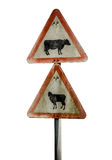 Grungy UK Cattle Warning Sign Royalty Free Stock Photography