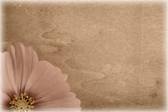 Grungy vintage flower Stock Photos