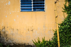 Grungy wall with window, bamboo and greenery. Facade of aged house. Wall of grungy and cracked yellow stucco with blue shuttered window. Old broken bamboo Stock Images