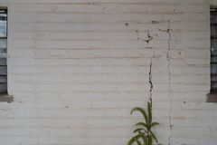 Grungy white brick wall with a plant growing in a crack royalty free stock photography