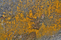 Grungy yellow mold background  Royalty Free Stock Photography