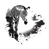 Grungy Zebra Stock Photos