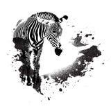 Grungy Zebra Stock Photos