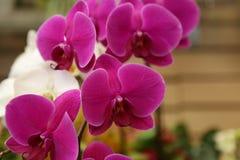 Grunt djup för rosa orkidér av fältet Arkivfoto