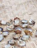 grunt för ostroner för dof öppen sökt pärla arkivbilder