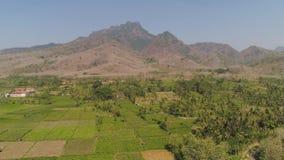 Grunt rolny w Indonesia zdjęcie wideo