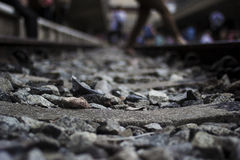 grunt spår för djupfältjärnväg Royaltyfria Foton
