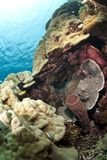 grunt tropiskt vatten för färgrik korallplats Royaltyfria Bilder