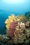 grunt tropiskt vatten för färgrik korallplats Royaltyfri Fotografi