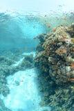 grunt tropiskt vatten för klar rev Arkivbild