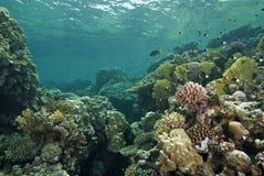 grunt undervattens- för reefscape Royaltyfria Bilder